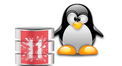 Linux Penguin Oracle 11g